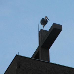 Storch_a